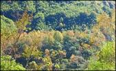 尖石鄉、秀巒村、青蛙石、薰衣草森林:秀巒楓樹林_17.jpg