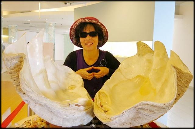 各種特展及參觀:貝殼博物館_033.jpg