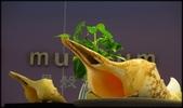 各種特展及參觀:貝殼博物館_002.jpg
