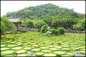 大台北地區:雙溪公園大王蓮_070.jpg