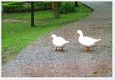 大溪老街‧公園、八德埤塘生態公園、大古山步道:八德埤塘生態公園-1_005.jpg