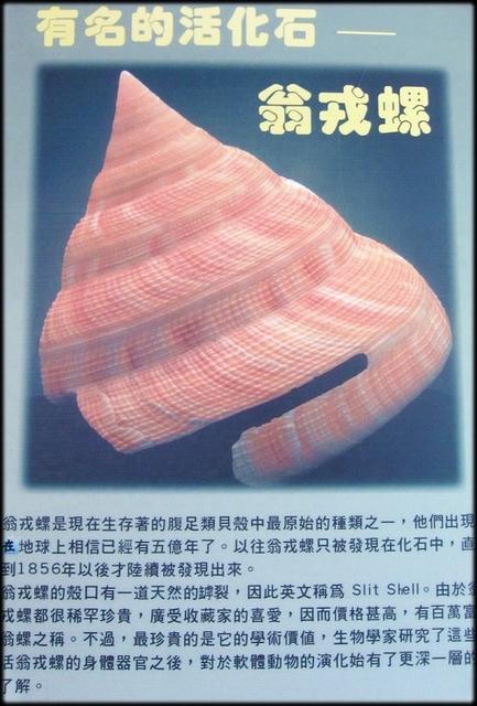 各種特展及參觀:貝殼博物館-1_012.jpg