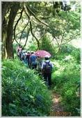 七星山公園、夢幻湖、冷水坑、中正山:中正山步道-1_398.jpg