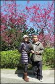 立法院、台北賓館、自由廣場、中正紀念堂:中正紀念堂櫻花-1_27.jpg