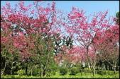 立法院、台北賓館、自由廣場、中正紀念堂:中正紀念堂櫻花-1_28.jpg