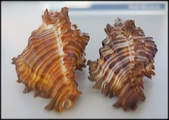 各種特展及參觀:貝殼博物館_016.jpg