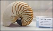各種特展及參觀:貝殼博物館_008.jpg