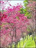 桃園地區風景區:長庚養生文化村賞櫻-2_047.jpg