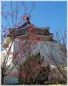 立法院、台北賓館、自由廣場、中正紀念堂:梅櫻爭豔_067.jpg