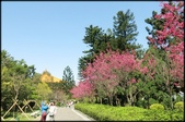 立法院、台北賓館、自由廣場、中正紀念堂:中正紀念堂櫻花-1_49.jpg