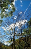 尖石鄉、秀巒村、青蛙石、薰衣草森林:秀巒楓樹林_59.jpg