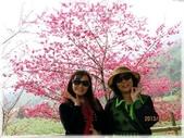 中部旅遊:草坪頭櫻花祭_055.jpg