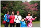 二格山、潭腰賞櫻、永安景觀步道、八卦茶園:二格山賞櫻_11.jpg