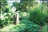 三峽風景區:紫微聖母環山步道探路_002.jpg