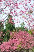 立法院、台北賓館、自由廣場、中正紀念堂:中正紀念堂櫻花-1_81.jpg