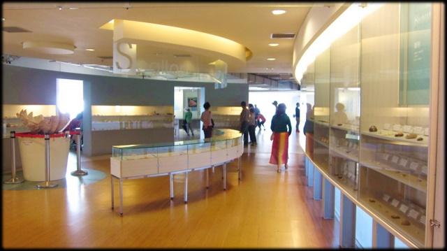 各種特展及參觀:貝殼博物館-1_004.jpg