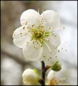 好友聚餐、歡唱、友人贈花、賞花:石園路落羽松_62.jpg