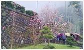 三峽風景區:行修宮辛夷花-1_005.jpg