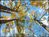 尖石鄉、秀巒村、青蛙石、薰衣草森林:秀巒楓樹林_76.jpg