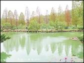 新竹風景區:六塘落羽松_005.jpg