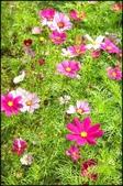 台北奧萬大、陽明山櫻花、竹子湖、平頂古圳步道:賞紫藤_044.jpg