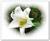 土城桐花公園、山中湖、文筆山、太極嶺:土城桐花公園_002.jpg