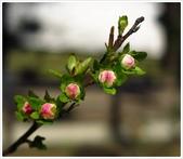 好友聚餐、歡唱、友人贈花、賞花:春遊中正紀念堂_06.jpg