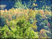 尖石鄉、秀巒村、青蛙石、薰衣草森林:秀巒楓樹林_08.jpg