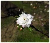 好友聚餐、歡唱、友人贈花、賞花:春遊中正紀念堂_12.jpg