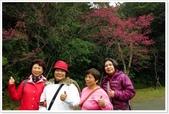 二格山、潭腰賞櫻、永安景觀步道、八卦茶園:二格山賞櫻_10.jpg
