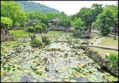 大台北地區:雙溪公園大王蓮_038.jpg