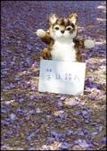 台北奧萬大、陽明山櫻花、竹子湖、平頂古圳步道:賞紫藤_047.jpg