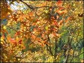尖石鄉、秀巒村、青蛙石、薰衣草森林:秀巒楓樹林_67.jpg