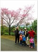 二格山、潭腰賞櫻、永安景觀步道、八卦茶園:二格山賞櫻_31.jpg
