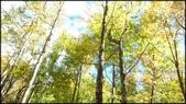 尖石鄉、秀巒村、青蛙石、薰衣草森林:秀巒楓樹林-1_002.jpg