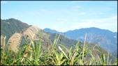 尖石鄉、秀巒村、青蛙石、薰衣草森林:秀巒楓樹林-1_009.jpg