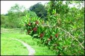三坑老街自然生態公園、石門大圳、小粗坑古道:三土亢自然生態園區_024.jpg