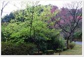 二格山、潭腰賞櫻、永安景觀步道、八卦茶園:二格山賞櫻_26.jpg