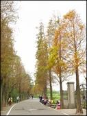好友聚餐、歡唱、友人贈花、賞花:石園路落羽松_60.jpg
