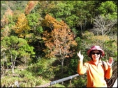尖石鄉、秀巒村、青蛙石、薰衣草森林:秀巒楓樹林_48.1.jpg