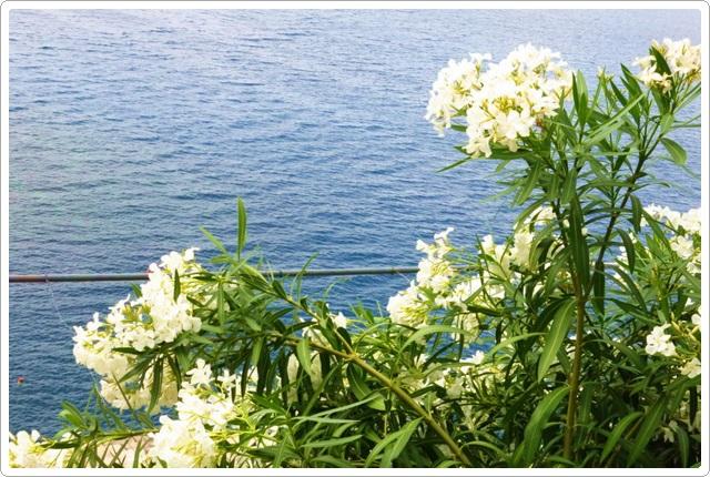 歐洲之旅:義大利9日遊-3_092.jpg