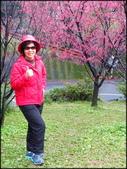 龜山壽山巖觀音寺石雲森林步道、福源山步道:壽山岩公園櫻花綻放-1_12.jpg