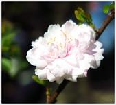 好友聚餐、歡唱、友人贈花、賞花:春遊中正紀念堂_03.jpg