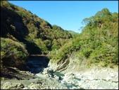 尖石鄉、秀巒村、青蛙石、薰衣草森林:秀巒楓樹林_172.jpg