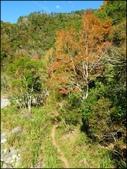 尖石鄉、秀巒村、青蛙石、薰衣草森林:秀巒楓樹林_170.jpg