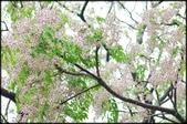 楊梅風景區:伯公岡公園_018.jpg