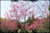 立法院、台北賓館、自由廣場、中正紀念堂:中正紀念堂櫻花-1_82.jpg