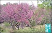 龜山壽山巖觀音寺石雲森林步道、福源山步道:2019壽山巖櫻花-1_012.jpg