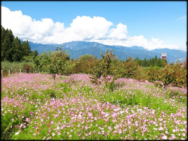 中部旅遊:福壽山農場_077.jpg