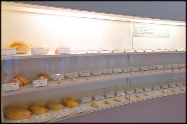 各種特展及參觀:貝殼博物館_028.jpg